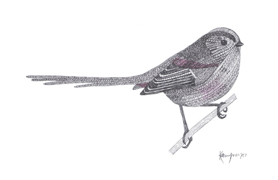 Garden Birds | Buy Drawings and Cards - Spring Animals